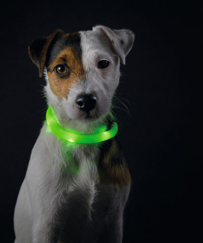 Yukon Luminescent LED Dog Collar