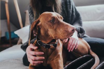 Dog collar Bison leather-Dark Brown