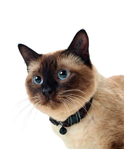 Cat collar Bison leather-Dark Brown